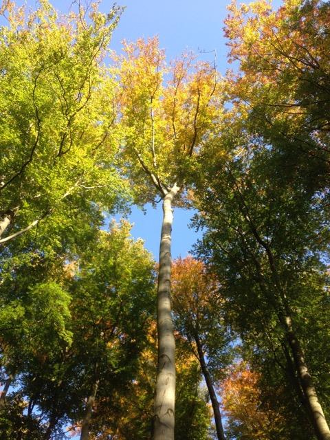 Herbstgedicht | Herbst | Bäume